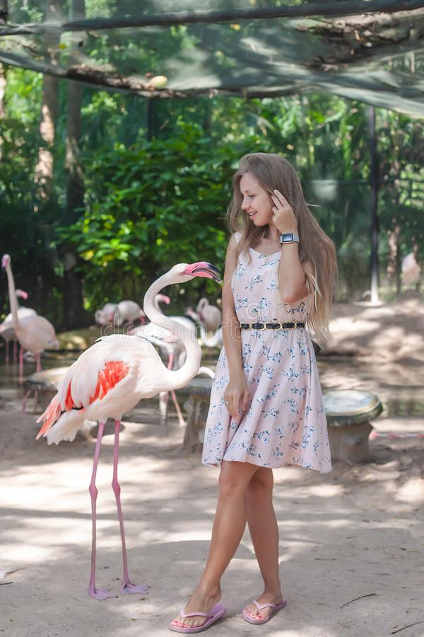 Free Woman Standing Near Flamingo Stock Images - 129534704