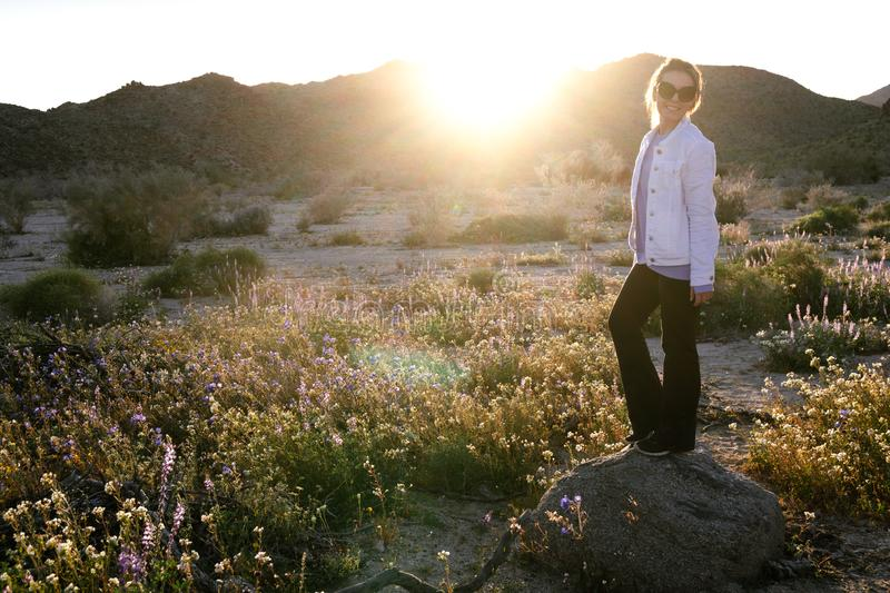 Woman standing on a rock in a wildflower field at dusk in Joshua Tree National Park California. Sunflare in photo.  royalty free stock images