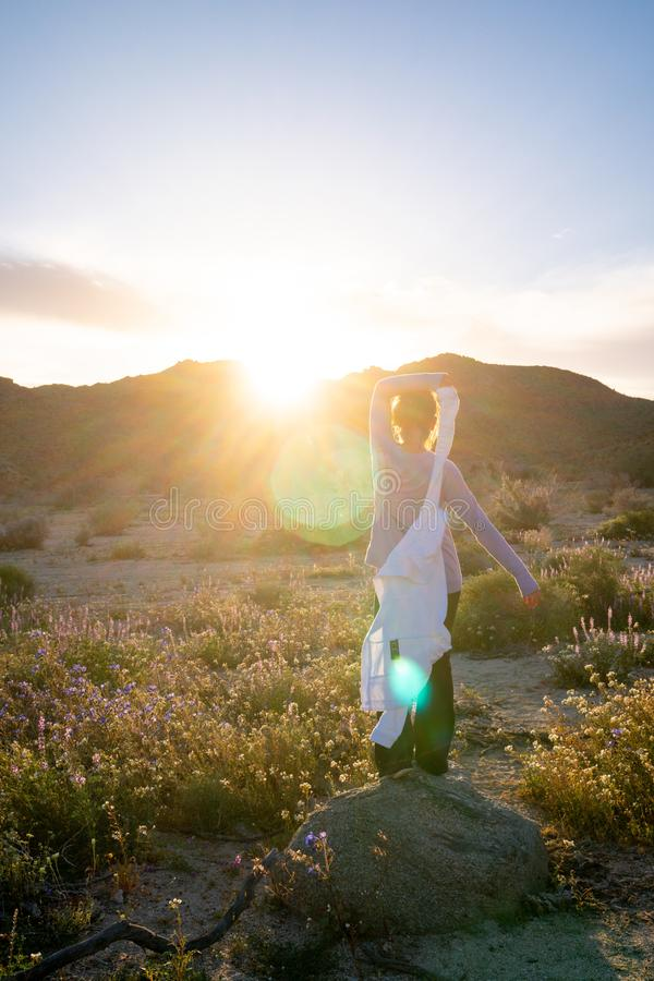Woman standing on a rock in a wildflower field at dusk in Joshua Tree National Park California. Sunflare in photo.  royalty free stock photos
