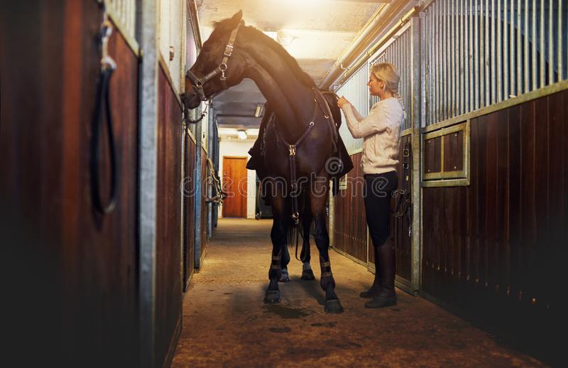 Woman standing in stables preparing her horse for a ride stock images