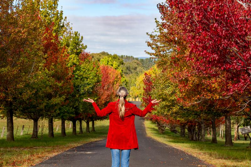 Woman stands among the rows of deciduous trees in Autumn stock photo