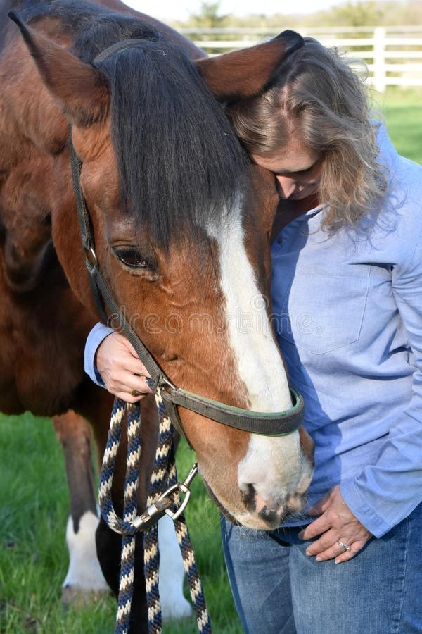 Blond woman hugs her  horse. Woman strokes her horse. The old horse enjoys it and  trustingly lays his head on her shoulder stock photography