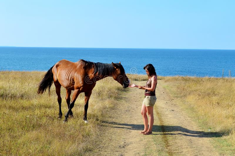 Woman Stroking a Beautiful Red Wild Horse. Young woman stroking a red horse grazing in the meadow on the sea royalty free stock photography