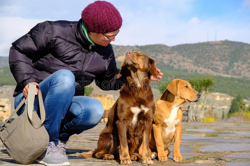 Woman stroking a dog that enjoys the caress with closed eyes stock photo