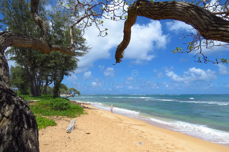 Woman strolling on the beach on a sunny day, Kauai, Hawaii. Woman strolling along the Pacific Ocean in the backyard of the Aston Islander on the Beach hotel royalty free stock images