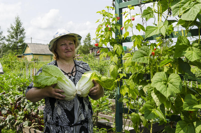 Woman on a summer residence with Chinese cabbage. royalty free stock photo