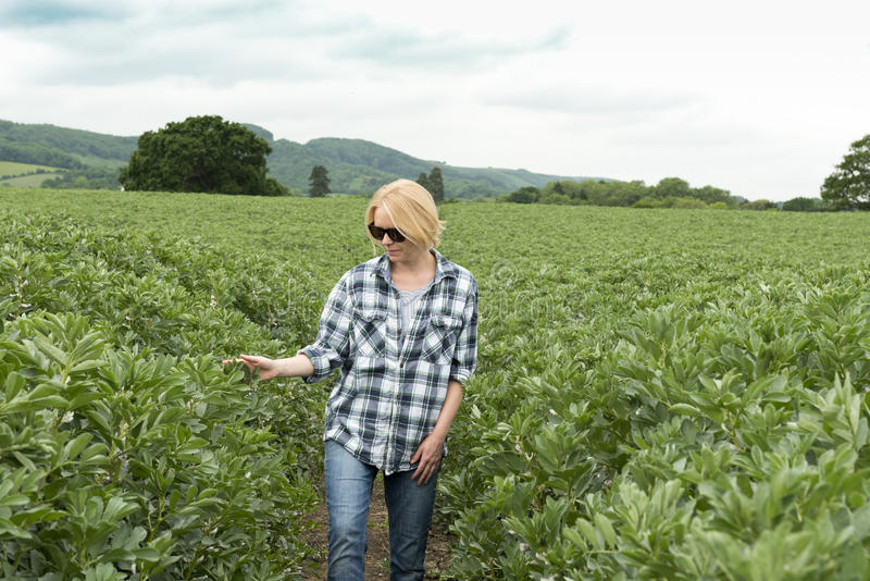 Woman in Sunglasses Touches a Plant in Huge Field stock photography