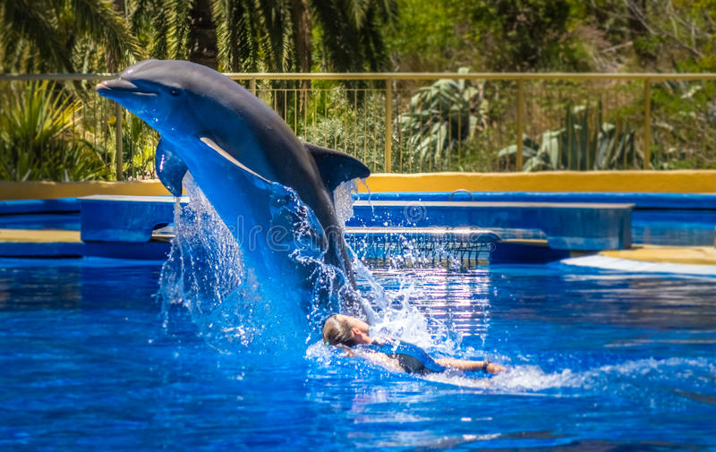 Woman swimming with dolphin. During show in Palmitos Park in Gran Canaria, Spain royalty free stock image
