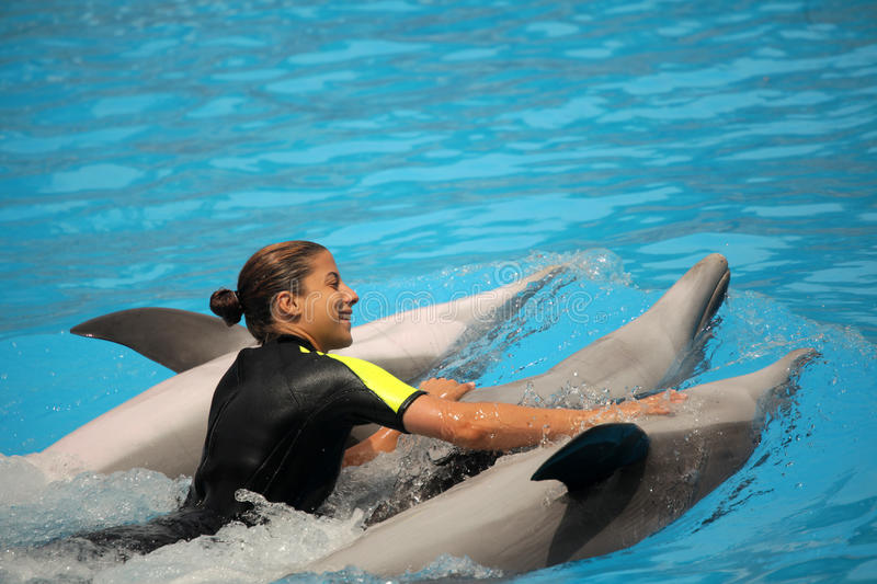 Woman swimming with dolphins stock image