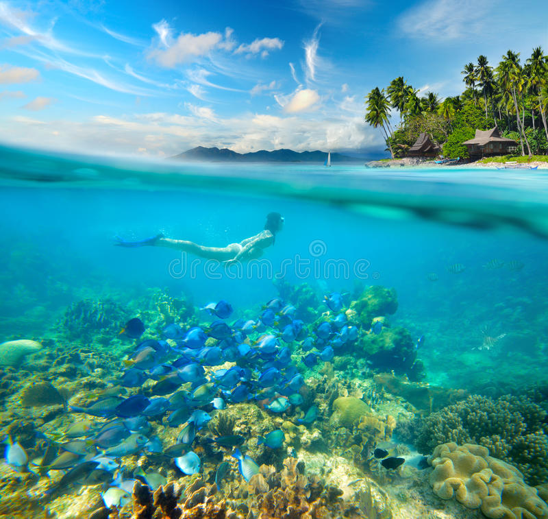 Coral Reef Background: Woman Swims Around A Beautiful Coral Reef Stock Photo