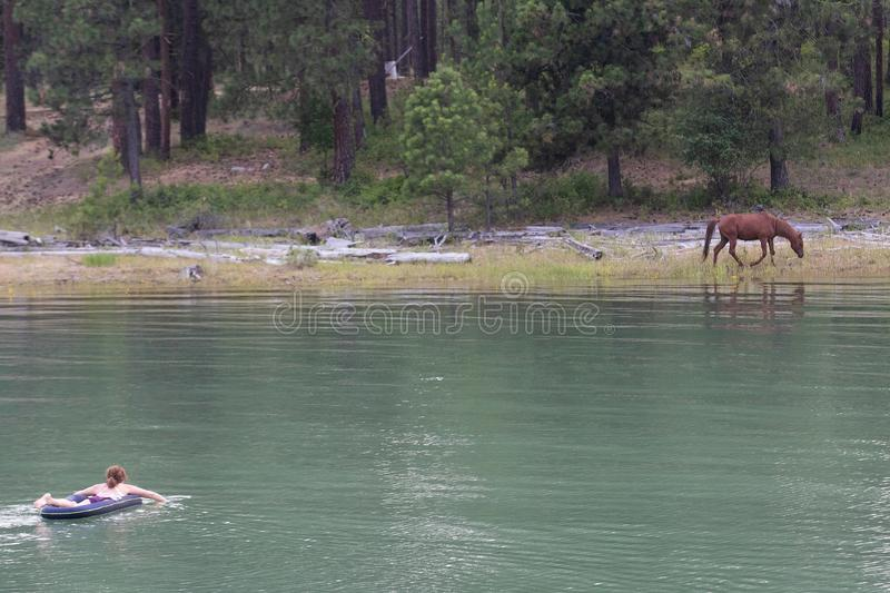 Woman swims towards wild horse at a lake stock images