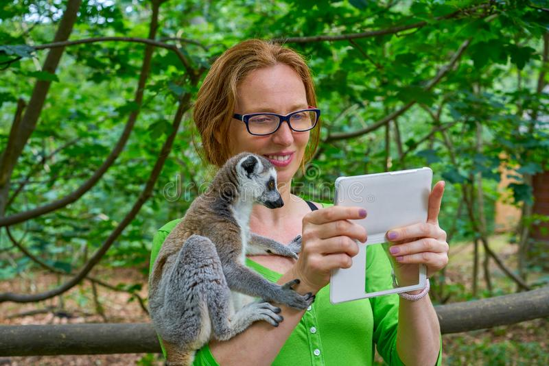 Woman taking photo selfie with ring tailed lemur stock image