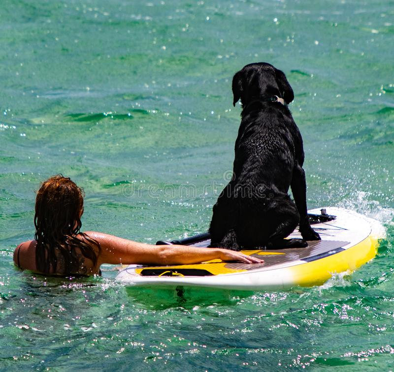 Woman teaches her dog how to surf in the ocean royalty free stock images