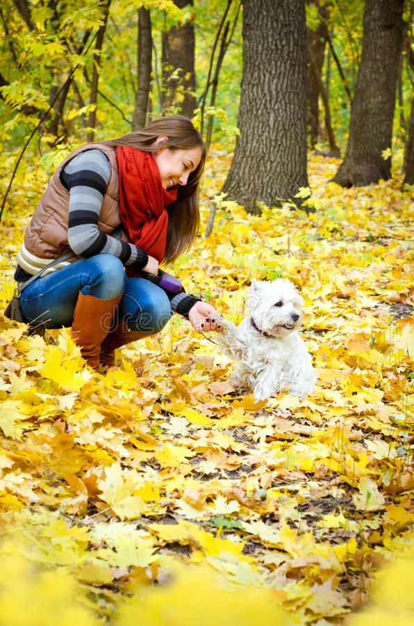 Woman with terrier royalty free stock photography