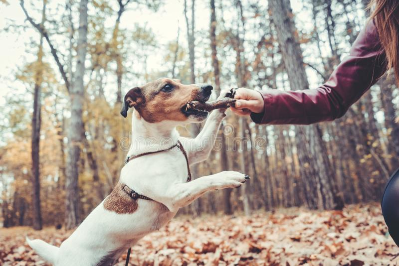 Woman throwing the stick playing with her dog royalty free stock photo