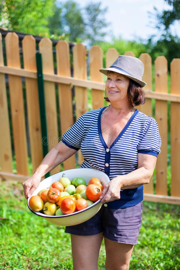 Woman and tomatoes stock photos