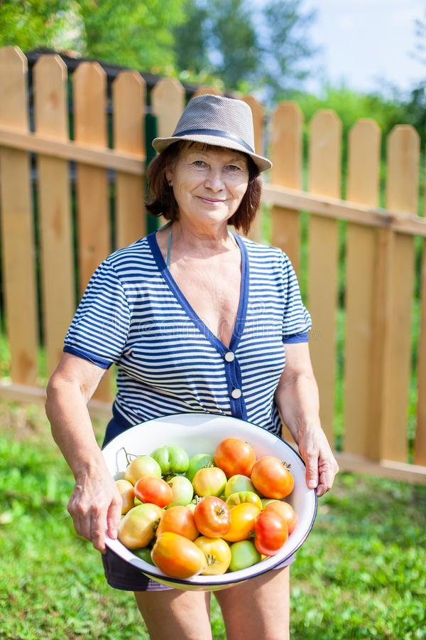 Woman and tomatoes stock photography
