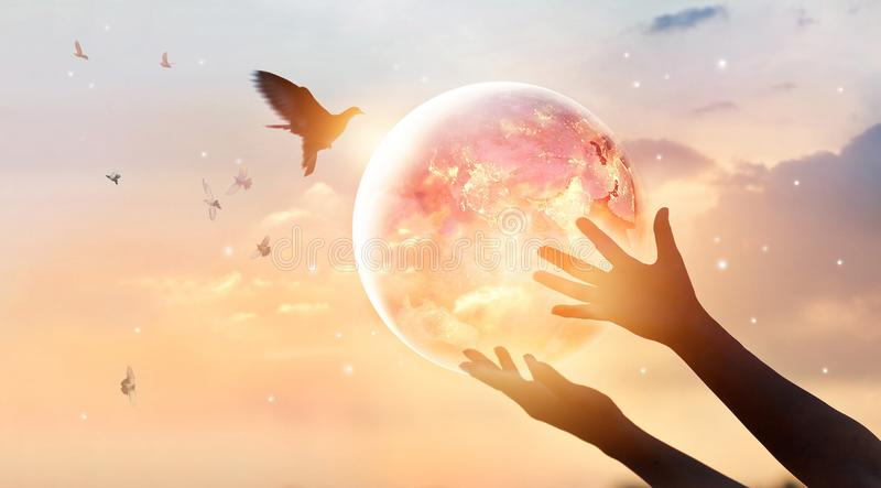 Woman touching planet earth, energy consumption of human. Woman touching planet earth of energy consumption of humanity at night, and free bird enjoying nature stock photography