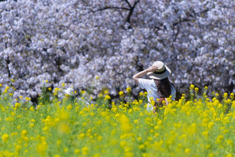 Woman tourist is enjoy traveling at flower field during spring season. In Japan stock photos