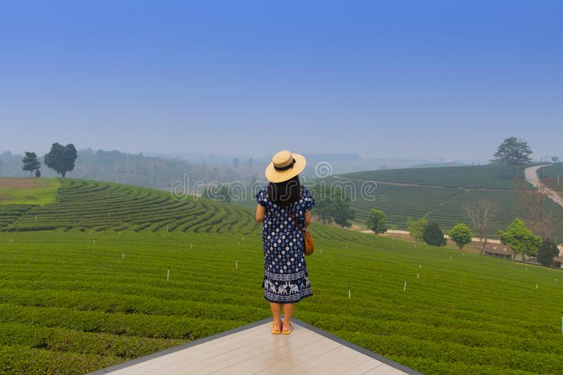 A woman tourist is sightseeing while traveling into Tea plantation field in Chiangrai royalty free stock photos
