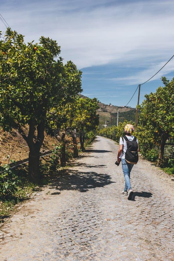 Woman tourist walking through the orange trees grove. At Pinhao village, Portugal royalty free stock photos