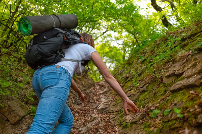 Woman tourist walks on a mountain forest trail. Back view royalty free stock image
