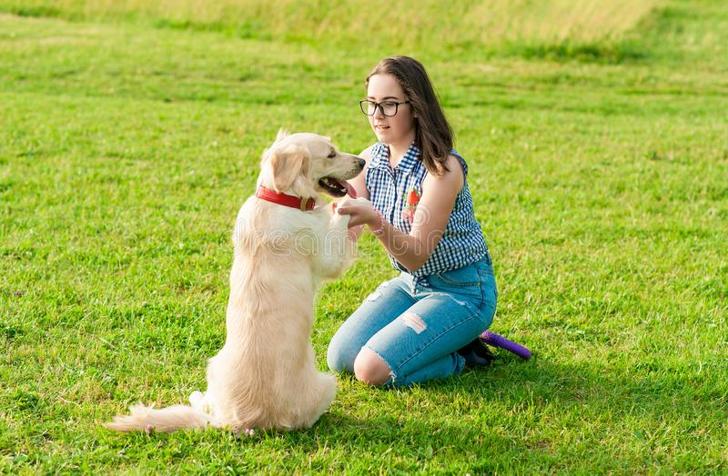 Woman training her dog golden retriever in the park royalty free stock image