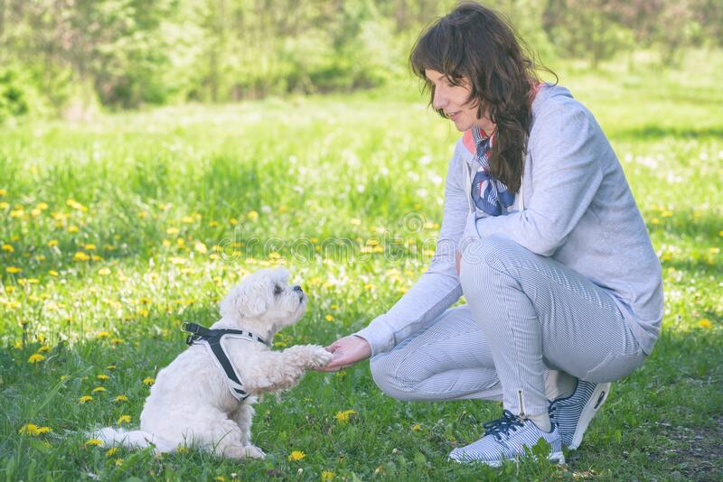 Woman trains her dog in the park stock photos