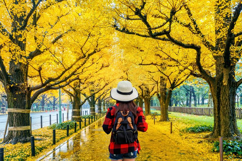 Woman traveler with backpack walking in Row of yellow ginkgo tree in autumn. Autumn park in Tokyo, Japan. royalty free stock image