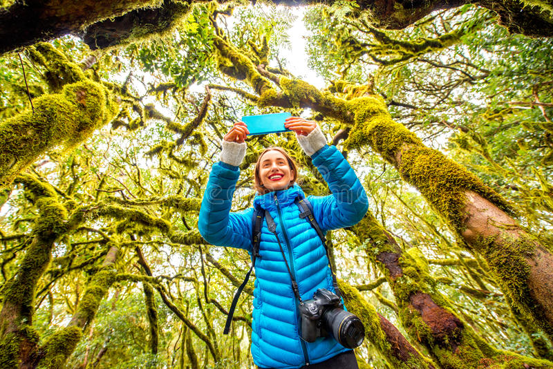 Woman traveling evergreen forest. Young woman in blue jacket traveling with backpack, photographing with smart phone beautiful evergreen forest in Garajonay park royalty free stock image