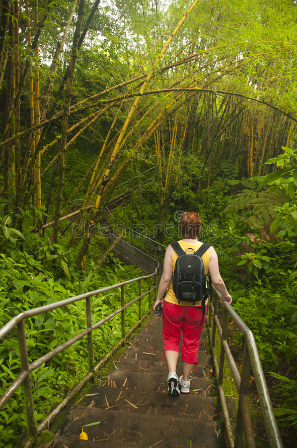 Woman travels through the jungle stock photo