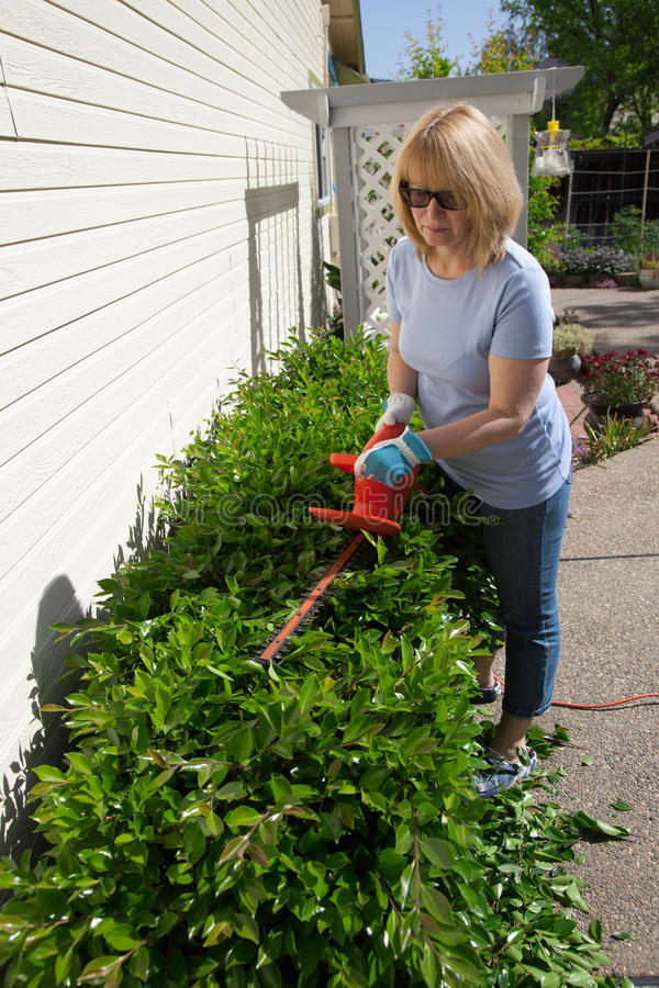 Image Result For How To Trim Overgrown Bushes