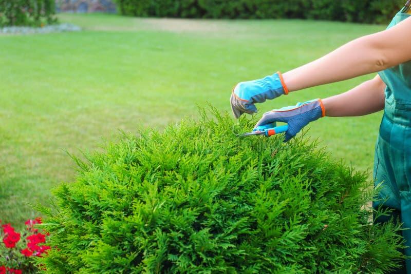 Woman trimming green bush outdoors, closeup. Home gardening stock image