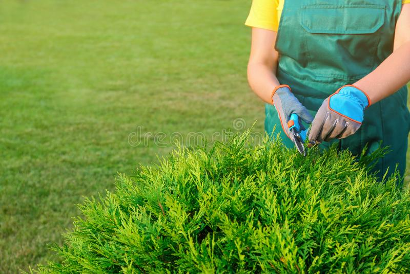 Woman trimming green bush outdoors, closeup. Home gardening stock photography
