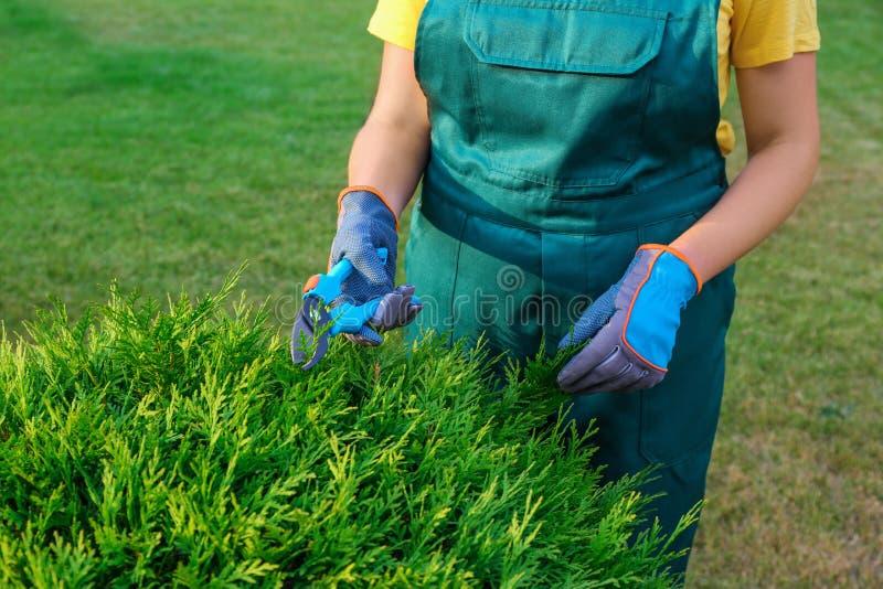 Woman trimming green bush , closeup. Home gardening. Woman trimming green bush outdoors, closeup. Home gardening stock photo