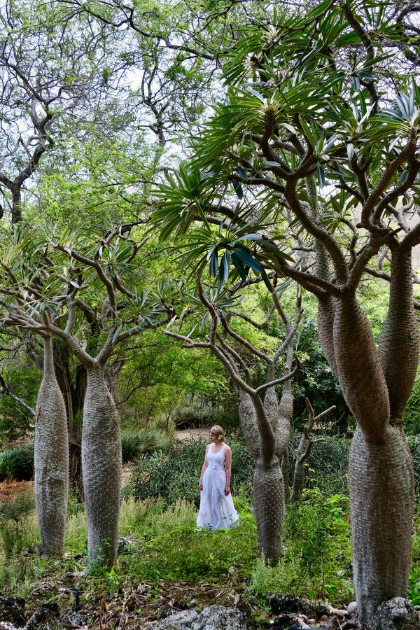 Woman in tropical forest.  Koko Crater botanical garden with strange trees from Madagascar. Koko Crater Botanical Garden near Honolulu. Oahu Island. Hawaii stock images