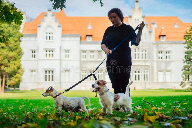 A woman with two dogs on a leash in a park in autumn. stock photography
