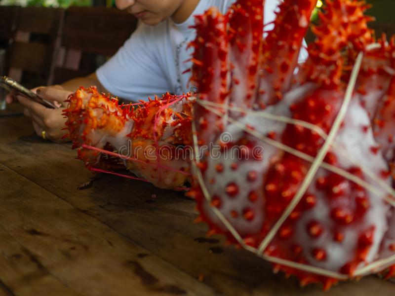 Woman with two king crabs Alaska frozen ready on wood table for cooking.  stock image