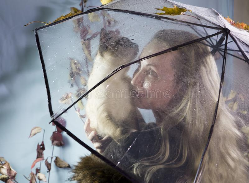 Woman under a transparent umbrella with raindrops holds a cat. Soft focus royalty free stock photo