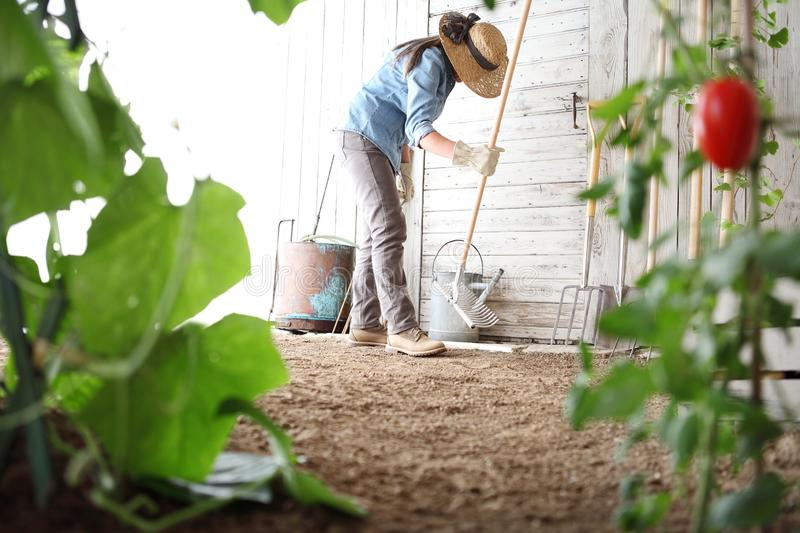 Woman in the vegetable garden with rake from the wooden wall of tools, healthy organic food produce stock photography