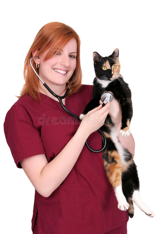 Woman vet with cat royalty free stock image