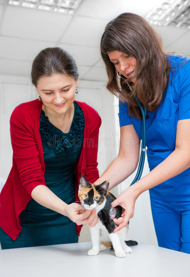 Download Woman Vet Consults Cat Owner Stock Photo - Image: 34398332