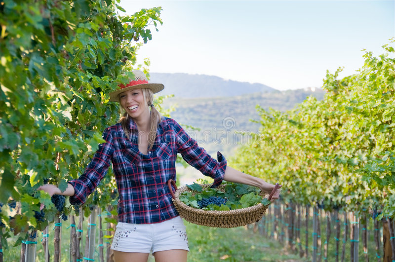 Woman In The Vineyard Stock Photo