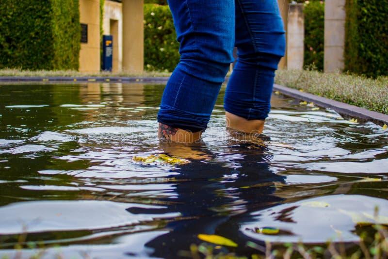 Woman Wading in Pond at Hamilton Gardens, New Zealand stock photo