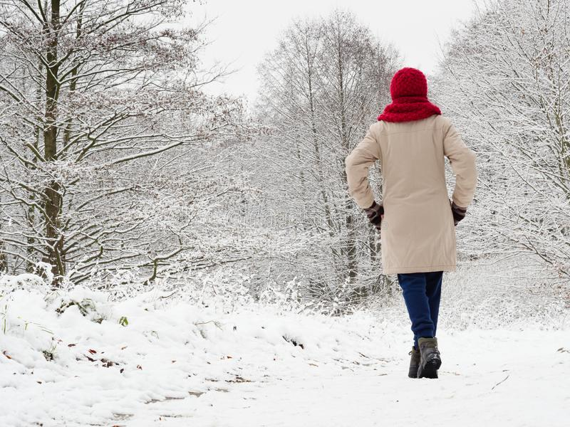 Woman walk in winter snow forest stock photo