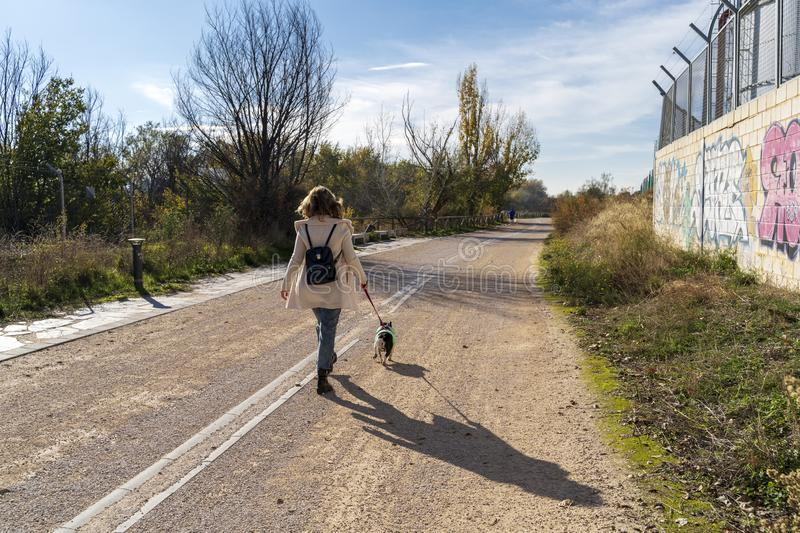 Woman walking and walking backwards with her French bulldog dog. Woman walking and walking backwards with her French bulldog dog, by a lane in the field stock photo