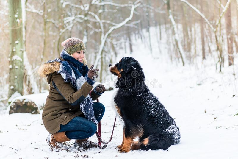 Woman walking Bernese mountain dog on a winter day. In the snow royalty free stock images