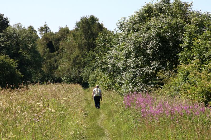 Woman walking on canal towpath Cumbria countryside stock images