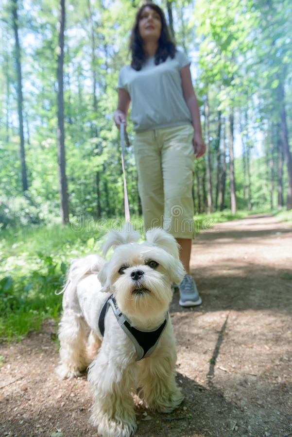 Woman walking with dog stock photography