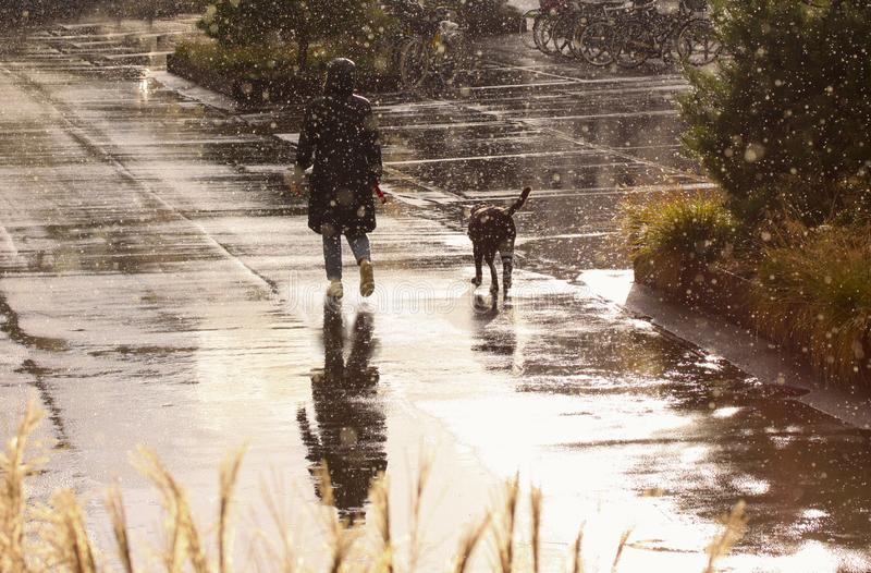Woman walking the dog in rainy weather royalty free stock image